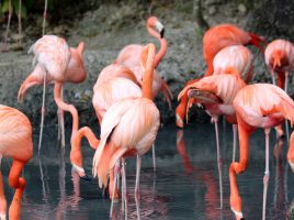 Animal attractions not to be missed this summer!