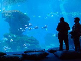 Discover some of the UK's best water parks and aquariums